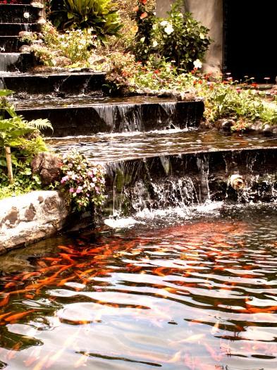 Un bassin japonais pour m diter - Bassin japonais ...